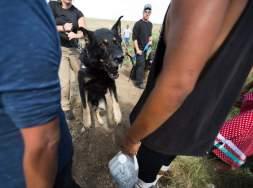 dog-attacking-water-protectors